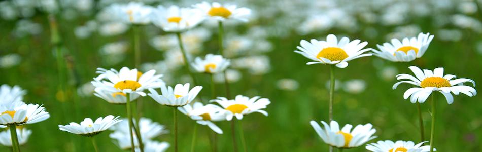 遺品整理の花の画像